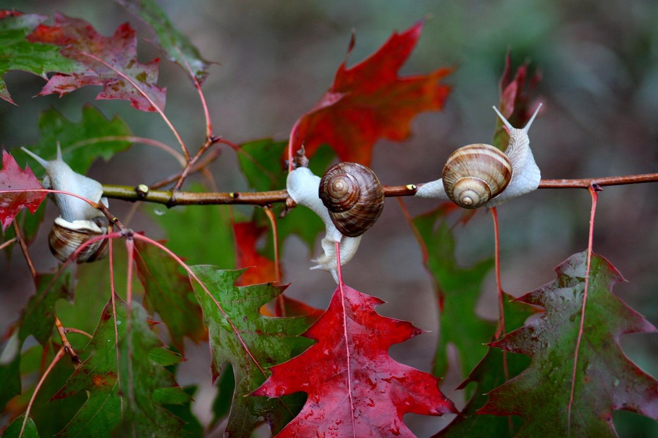 snails-2083044_1280